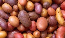 بذر سیب زمینی بنفش
