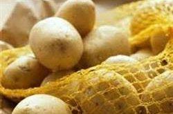 بذر سیب زمینی ایرانی