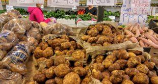 بازار خرید بذر سیب زمینی