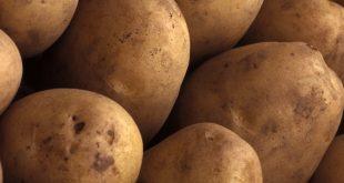 قیمت فروش بذر سیب زمینی
