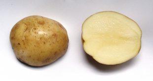 اخذ نمایندگی بذر سیب زمینی تهران