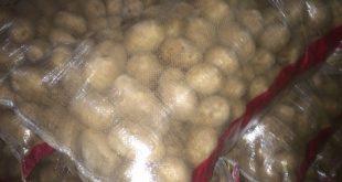 بازار فروش بذر سیب زمینی