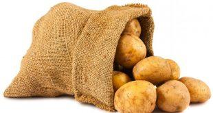 بذر سیب زمینی بانبا