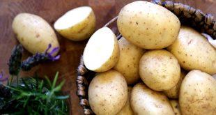 بذر سیب زمینی بورن