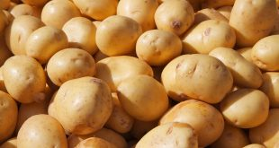 بذر سیب زمینی اسپریت